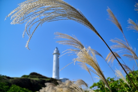 Selective focus view of weeds and a lighthouse