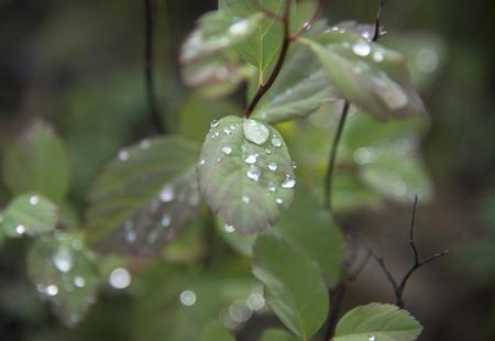 gotas de agua: Gotas de lluvia