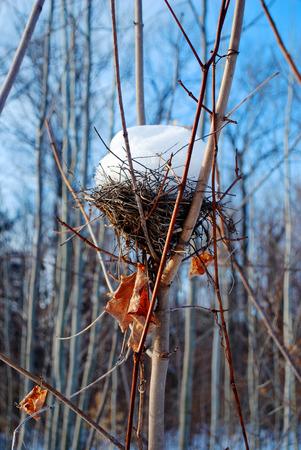 Nest Cone Banco de Imagens
