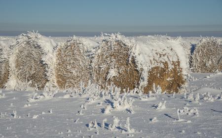 Frozen Hay Bales