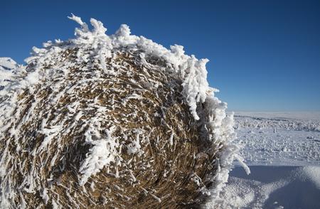 Frozen Bale