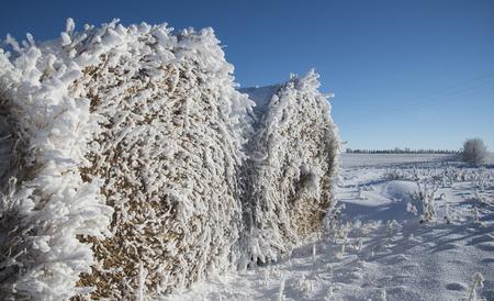 Frozen Bales