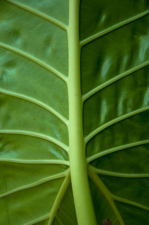 Green leaf background texture