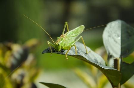 grasshopper Imagens