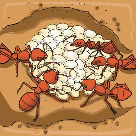 赤アリの巣と卵  イラスト・ベクター素材