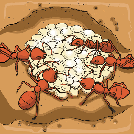 Red ants nest with eggs