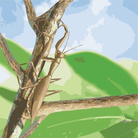 stick Mantis vector illustration Illustration