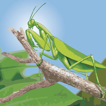 Green praying mantis vector illustration.