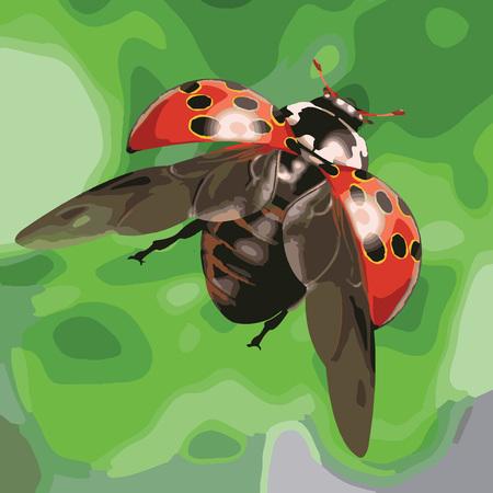 red black dots ladybug vector illustration