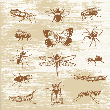 Bugs insects print specimen
