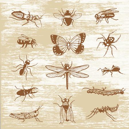 Los insectos insectos imprimen espécimen Foto de archivo - 89751231