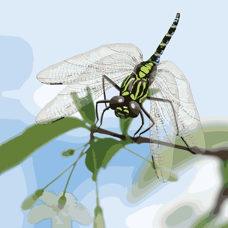 Close up Beautiful Dragonfly on plant vector