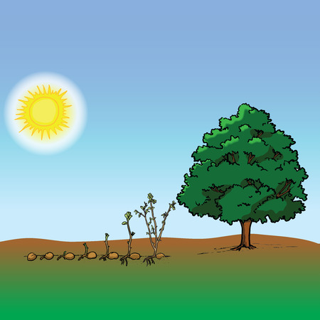Growing plant in process vector, tree, trees, seeds, growing, nature, sun, sunlight, sky, blue sky, strong tree, grass, earth, Tree life cycle, agriculture, botanical, botanic, garden, jungle, landscape, concept, ecology, education, environment, ecosystem, green, growth, infographic, learning, life, organic, process, spring, sprout, stage, start, young, old, stem, root, leaves, leaf, branch
