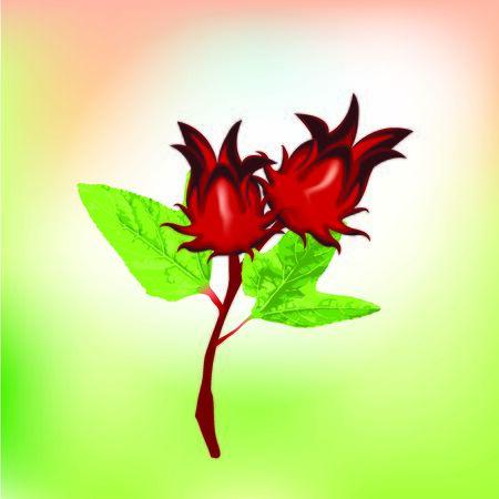 Roselle Hibiscus flower