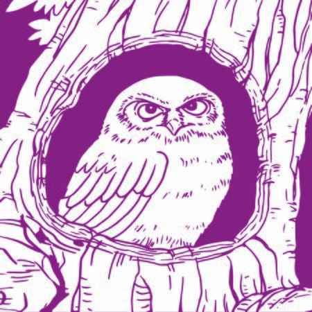 Owl stay  insdie tree hole home  line drawing