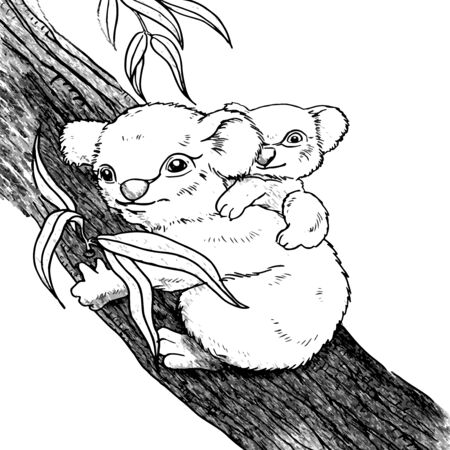 Cute Koala with baby on tree line drawing
