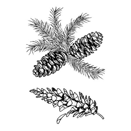 pine cone  sketches line drawing set