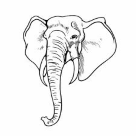 Elephant head line sketches Иллюстрация