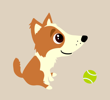 corgi: Cute corgi puppy wants to play Stock Photo
