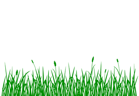 Green grass pattern isolated on white background Stock fotó