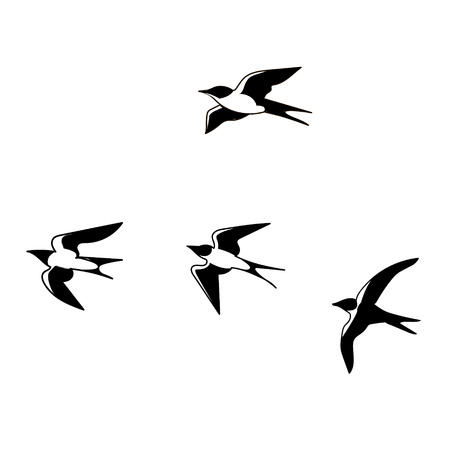 Illustration hand drawn swallows isolated on white background  vector eps 10 Stock Photo