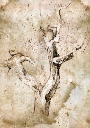 Old sepia tree drawing