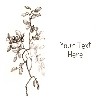 Plant Drawing with space for the text