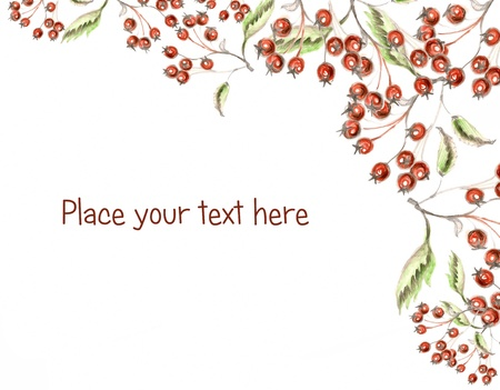 Red berries holly hand made drawing with space for your text Stock Photo