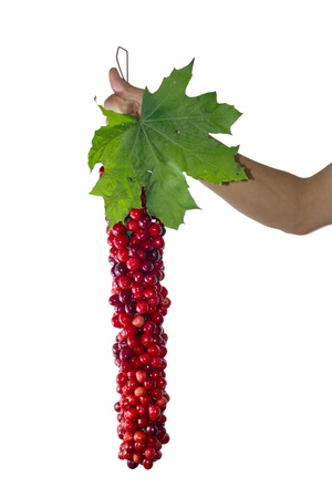 Cherries with leaf holded by a hand