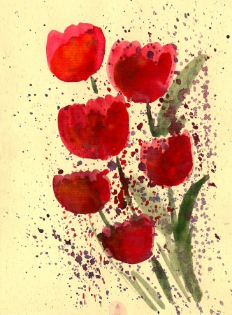 Red tulip painted in watercolor  isolated on white