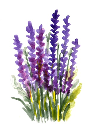 Purple bouquet of watercolor flowers isolated on a white background Stock Photo