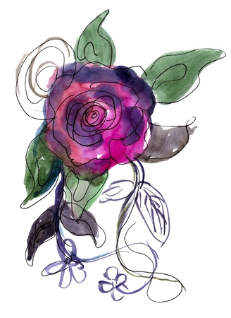 Purple Rose painted in watercolor  isolated on white