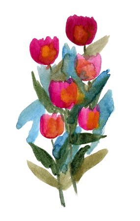 Tulip flowers painted in Watercolor isolated on white Stock Photo
