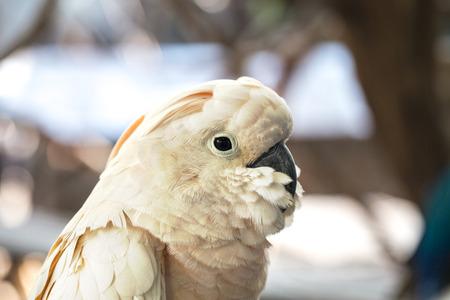 at white: White parrot Stock Photo