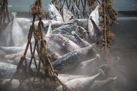 by catch: Transporte de pescado desde el barco Foto de archivo