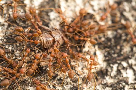 ants: Ant Group  Ant Group Ant Group