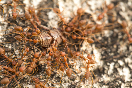 hormiga: Hormigas Grupo de hormigas Grupo de hormigas Grupo Foto de archivo