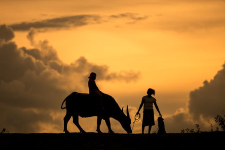 isaan: Farmers and their cattle back home in the sunset.