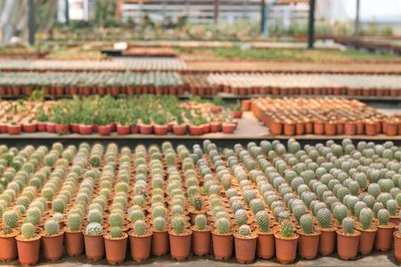 Cactus garden in Thailand is a new species.