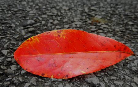붉은 잎 스톡 콘텐츠
