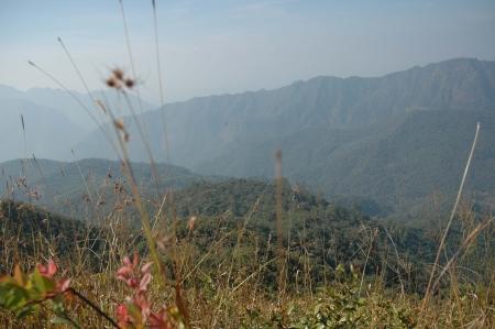 cima montagna: Erba e Mountain Top IV