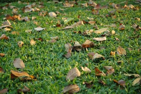 Grass and Leaves photo