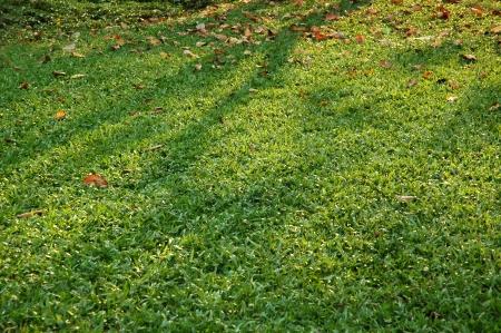 Sunlight on Grass photo