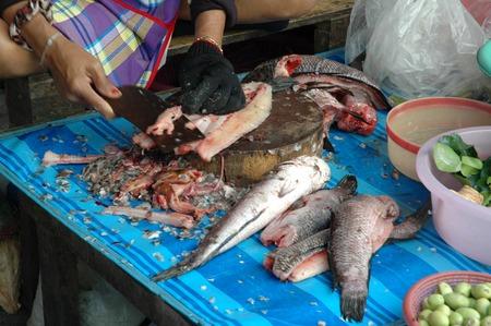 chevron snakehead: Filleting Fresh Snakehead Fish Stock Photo