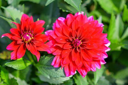 Beautiful flowers in the garden. 版權商用圖片 - 140352036