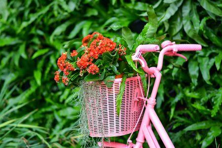 Beautiful flowers in the garden. 版權商用圖片 - 138528963