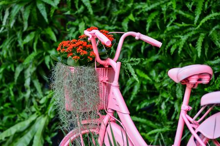 Beautiful flowers in the garden. 版權商用圖片 - 138529083