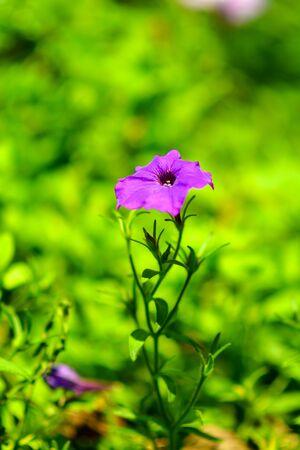 Beautiful flowers in the garden. 版權商用圖片 - 138528999
