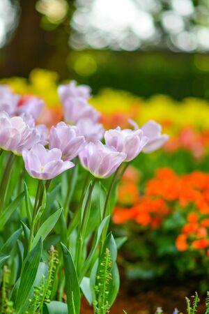 Beautiful flowers in the garden. 版權商用圖片 - 138529133