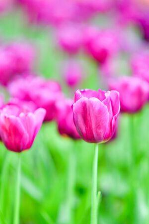 Beautiful flowers in the garden. Imagens - 138529003
